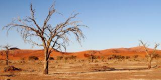A Kalahári sivatag